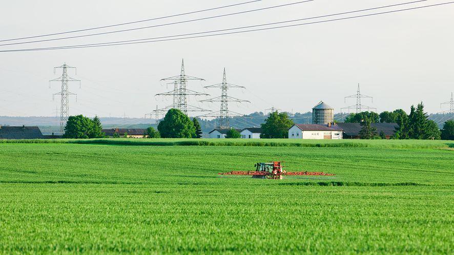 Piractwo kwitnie na polskich wsiach: rolnicy korzystają z nielicencjonowanej informacji genetycznej