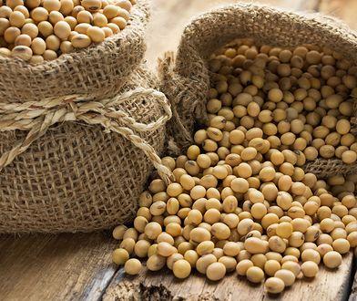 Największym atutem ziaren soi jest wysoka zawartość białka