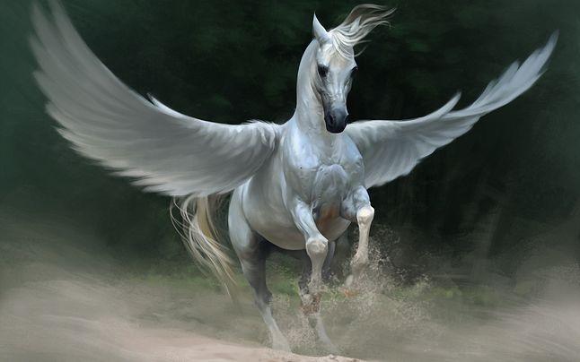 Pegaz w swoich skrzydłach przyniósł powiew zmian.