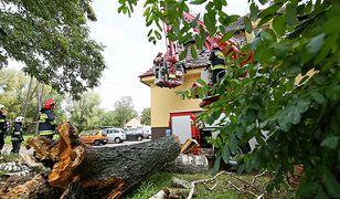 Pogoda. Synoptycy ostrzegają: to dopiero początek wichur. Powalone drzewo uszkodziło budynek szkoły w wielkopolskich Przygodzicach