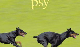 czarne-psy.jpg