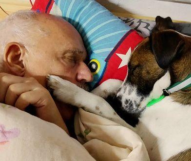 Korwin-Mikke przekonuje, że jego pies nie boi się petard
