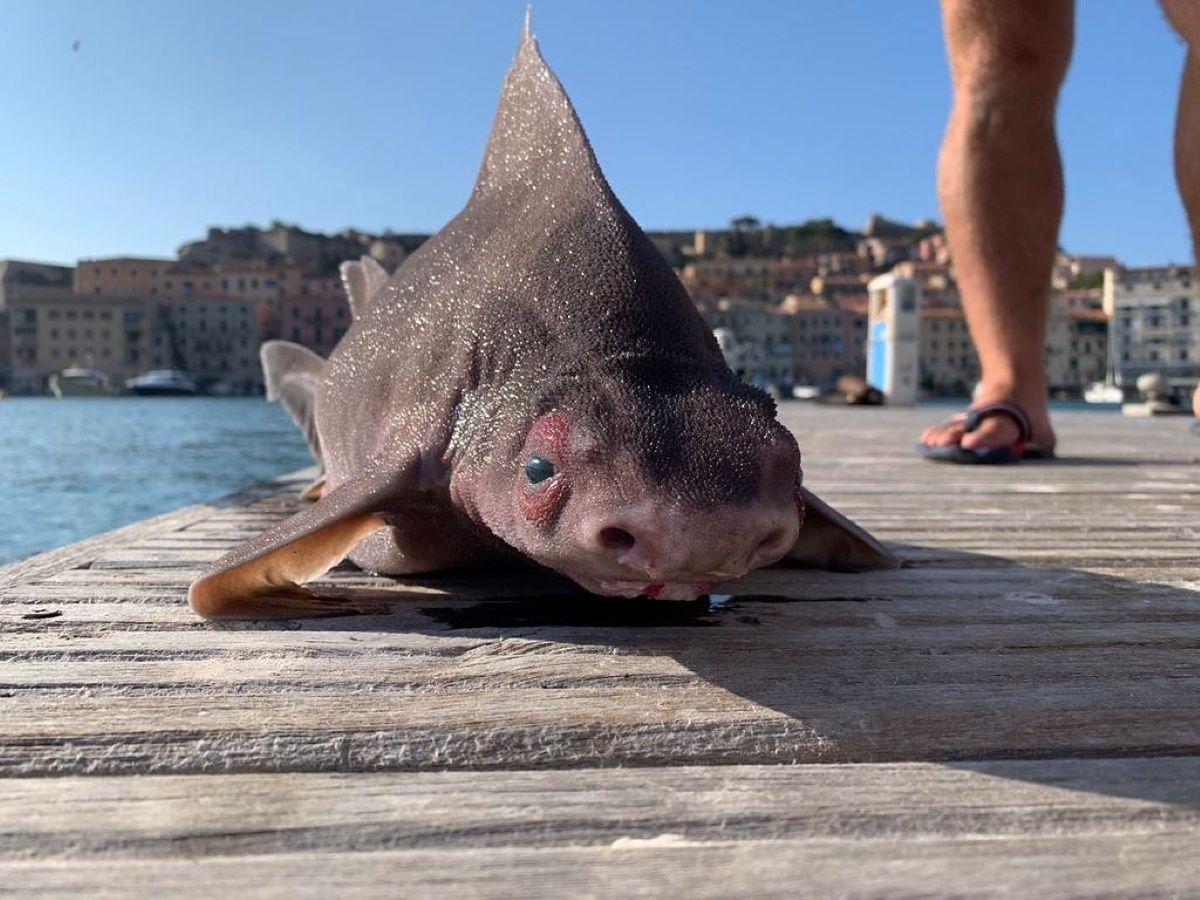 Wyłowili rekina z wody. Od razu zauważyli, że coś z nim nie tak