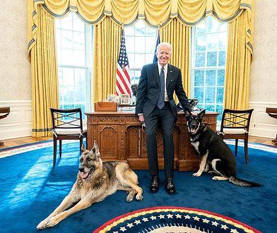 Psy Bidena wróciły do Białego Domu