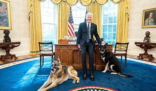Psy Bidena usunięte z Białego Domu. Behawiorysta o możliwej przyczynie