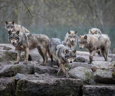 Formalnie nie łamią prawa. Jednak nęcenie dzikich zwierząt jedzeniem pokazuje brak wyobraźni