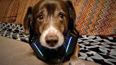 Logitech G733 LIGHTSPEED - bezprzewodowy luksus który doceni każdy gracz komputerowy i konsolowy - Niestety na psiaka tym razem się nie zmieszczą :(