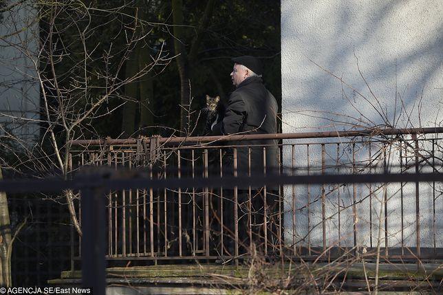 Jarosław Kaczyński troskliwie zajmuje się kotem