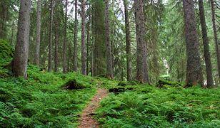 """Lasy Państwowe przypominają jak się wypróżniać w lesie. """"To takie proste"""""""