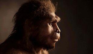 Naukowcy odkryli przyczynę wyginięcia Homo erectus