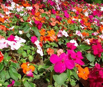 Najlepsze rośliny na balkon i taras