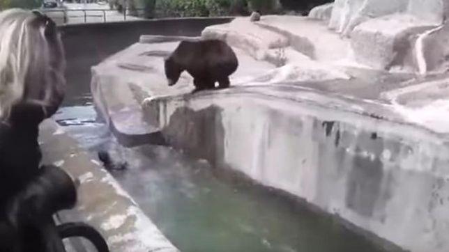 Warszawa podjęła decyzję o przeniesieniu niedźwiedzi. Koniec z wybiegiem przy ulicy