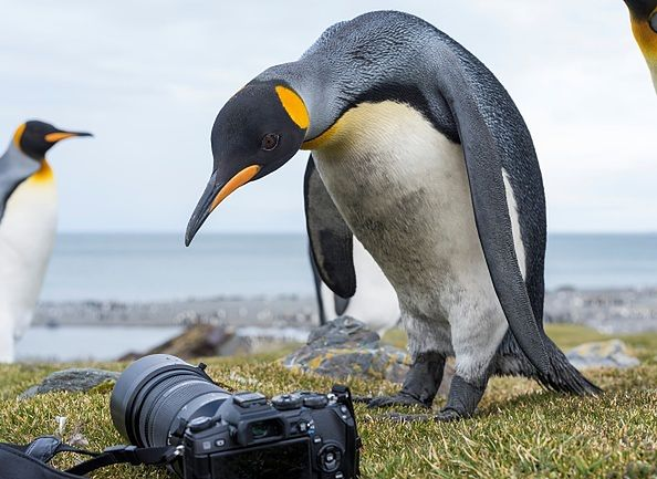 Podtlenek azotu z odchodów pingwinów przyczynił się do odurzenia naukowców.