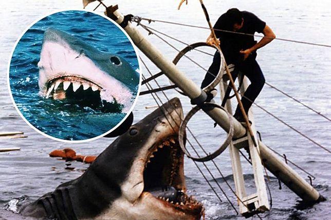"""""""Będziesz potrzebował większej łodzi"""". 45 lat od premiery """"Szczęk"""""""