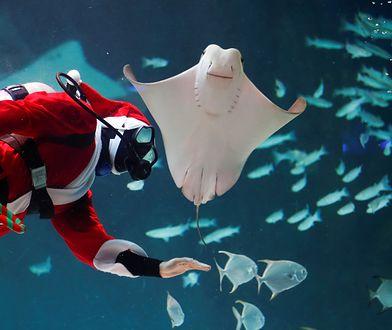 Nurek przebrany za Świętego Mikołaja w oceanarium w Seulu.