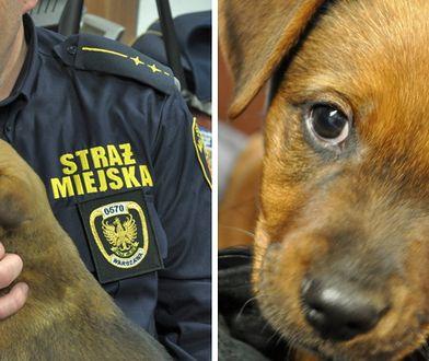 Błąkającego się po Młynowie szczeniaka przygarnęli strażnicy miejscy