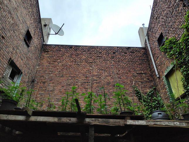 Plantacja marihuany ukryta na dachu.