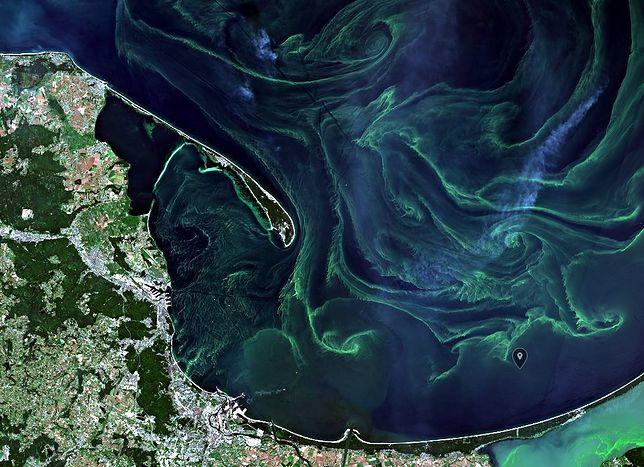 Sinice powróciły do wód Morza Bałtyckiego