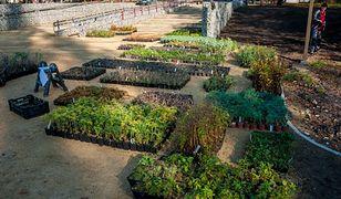 Sosnowiec. Miasto wzbogaci się o 47 tysięcy drzew i krzewów