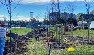 Sosnowiec. Nowy park nabiera kształtów. Posadzono 240 drzew. Docelowo ma ich być ponad tysiąc.