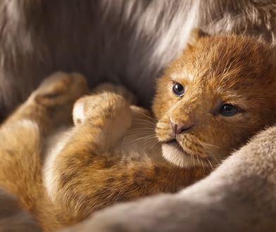 Król Lew – dubbing najnowszego filmu Disneya