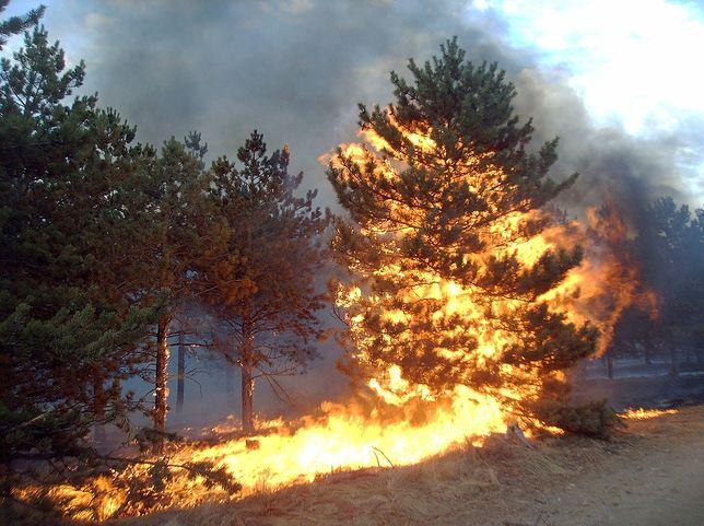 Chorwacja w ogniu. Walka z potężnymi pożarami nadal trwa