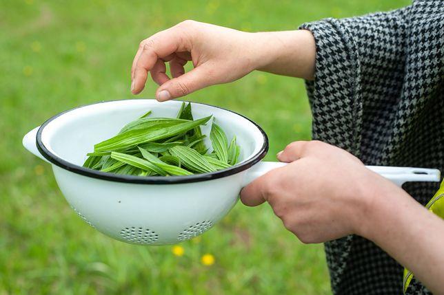Rośliny, które rosną w ogrodzie mogą pomóc na wiele dolegliwości