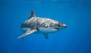 Ataki rekinów są częstym zjawiskiem u wybrzeży Australii