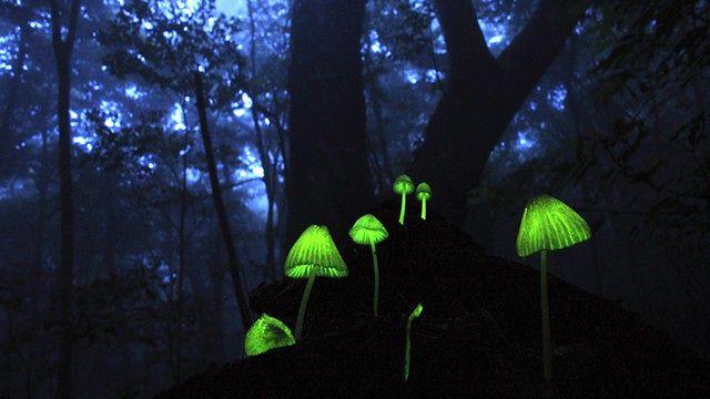 Wystawa: naucz się rozpoznawać grzyby!