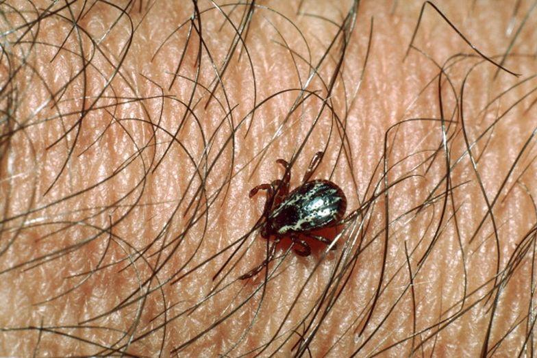 Czy koronawirus może być przenoszony przez kleszcze i komary?