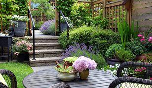 Aranżacja ogrodu od zera. Krok po kroku