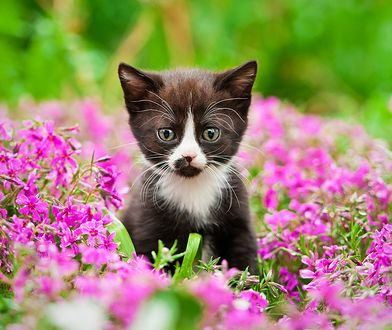 Kot w ogrodzie. Jak stworzyć zwierzakowi bezpieczny azyl bez wyrządzania szkód zieleni?