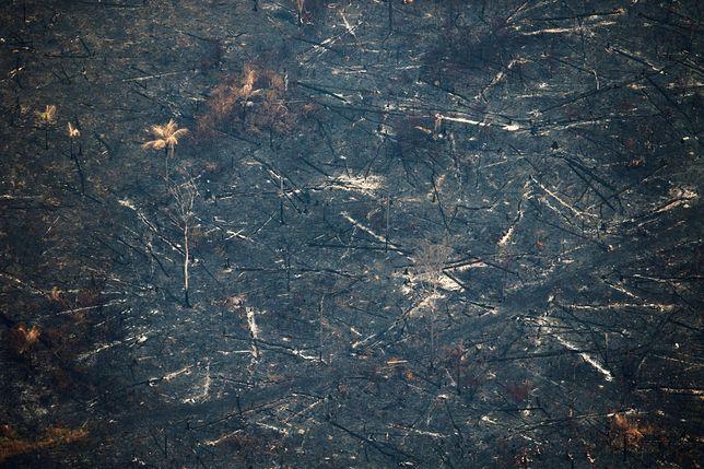 Zgliszcza pozostawione przez pożar w Amazonii