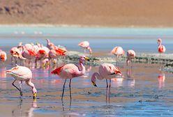Praca marzeń do wzięcia! Specjalista ds. flamingów na Bahamach