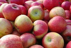 Szykują się rekordowe zbiory jabłek. Problemem może być ich sprzedaż