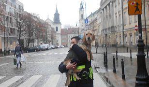 Warszawa. Niedosłyszący Ciastek zagubił się w mieście