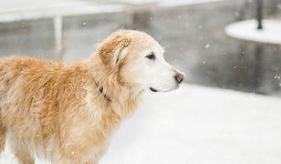 Park Powstańców Warszawy. Nurkowie poszukiwali psa w zamarzniętym stawie