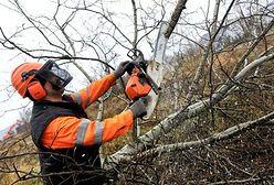 Wycinka drzew i krzewów bez zezwolenia. Ministerstwo tłumaczy, jak to działa