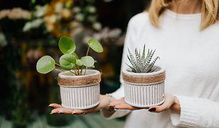 Bezpieczna, zielona przestrzeń dla malucha. Jak wybrać rośliny, które nie zaszkodzą dziecku?