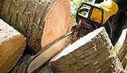Drewno tanieje, leśnicy podwajają zyski