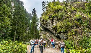 Turyści na szlaku w Tatrach