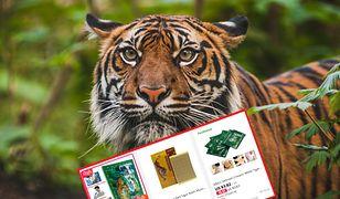 Na świecie zostało coraz mniej tygrysów, a czarny rynek produktów na bazie tych zwierząt prężnie się rozwija.