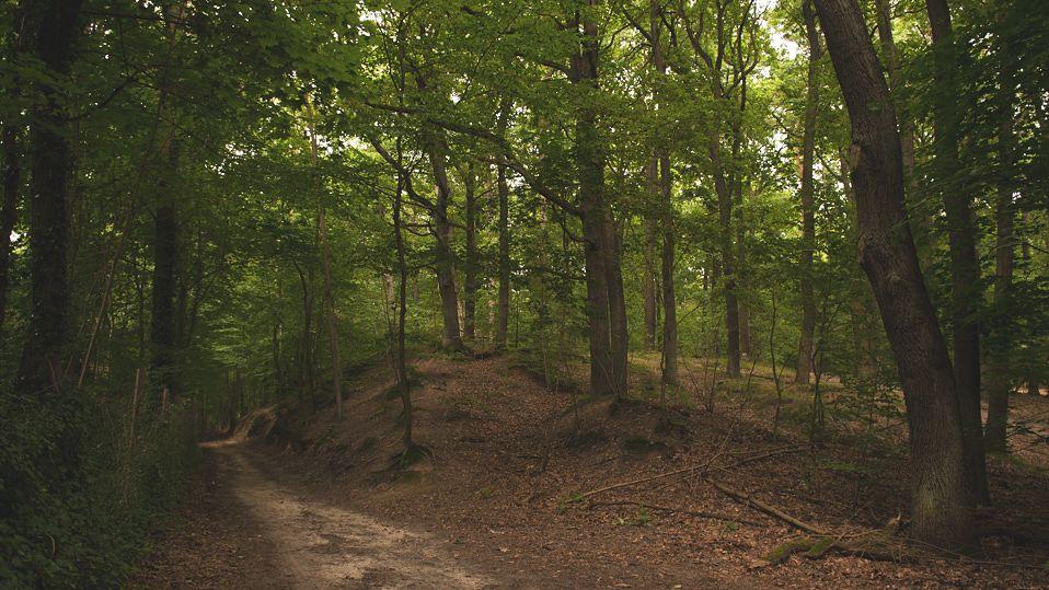 Dwugłowa żmija w polskim lesie. Lasy Państwowe komentują [Zdjęcia]