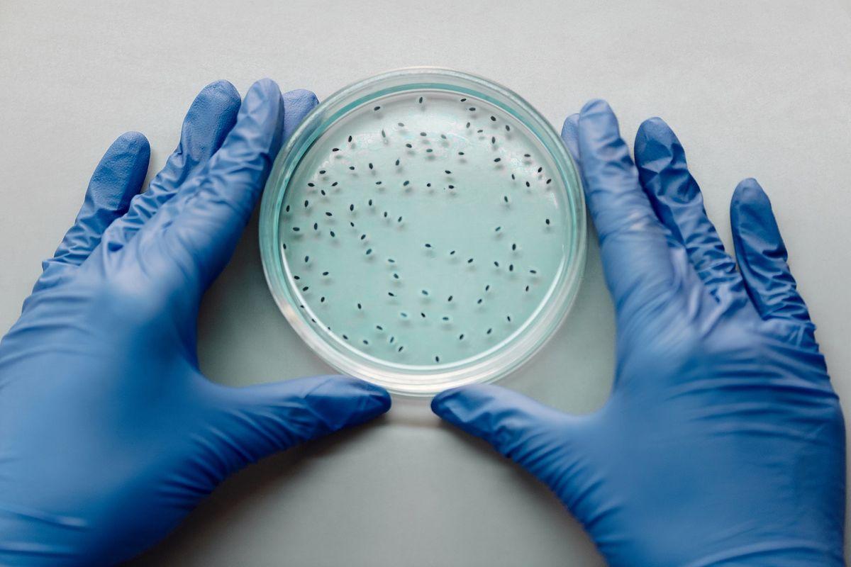 Większość zidentyfikowanych wirusów to bakteriofagi.