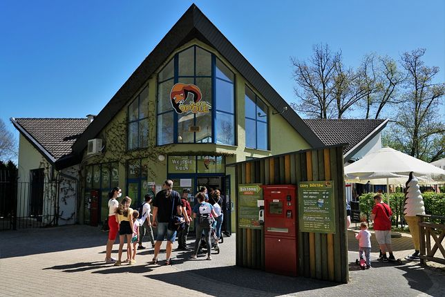 Zoo w Opolu odwiedzają w maju tłumy turystów