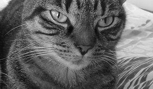 Gdzie wybita szyba i zwłoki kota? Kontrowersje wokół Rafalali