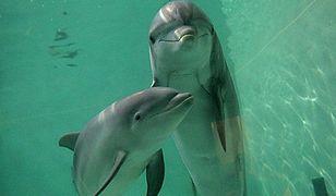 Nie uwierzysz, co robią w nocy delfiny