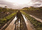 190 mln zł - do windykacji od rolników z tytułu nienależnych dopłat