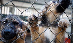 Schronisko dla zwierząt otrzymało ogromny spadek. Za pieniądze powstanie lecznica