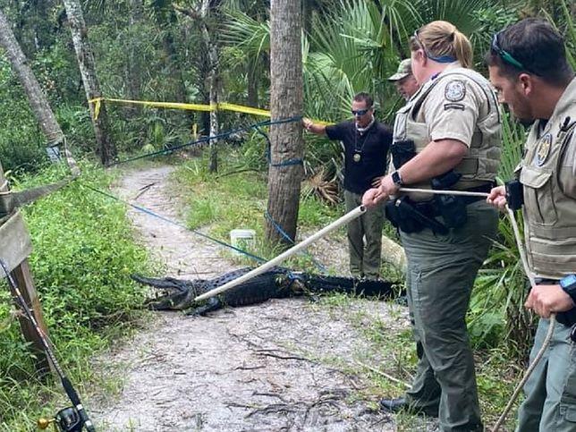 USA. Aligator zaatakował rowerzystę